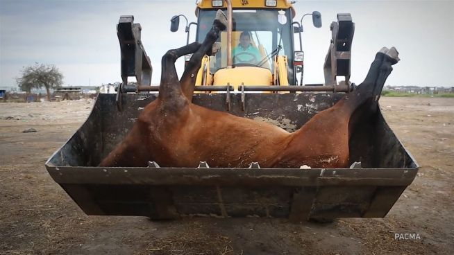 Pilgerfahrt in den Tod: Wie Tiere auf den Reisen leiden