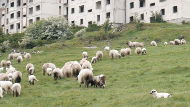 Verlassen? Tiere beleben rumänische Stadt wieder
