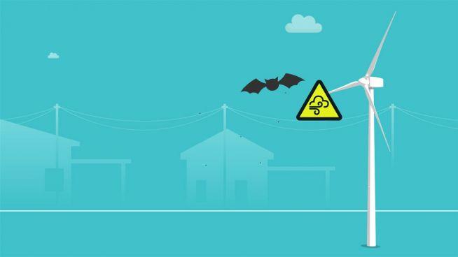 Batman in Gefahr: Schweden bangen um Fledermäuse