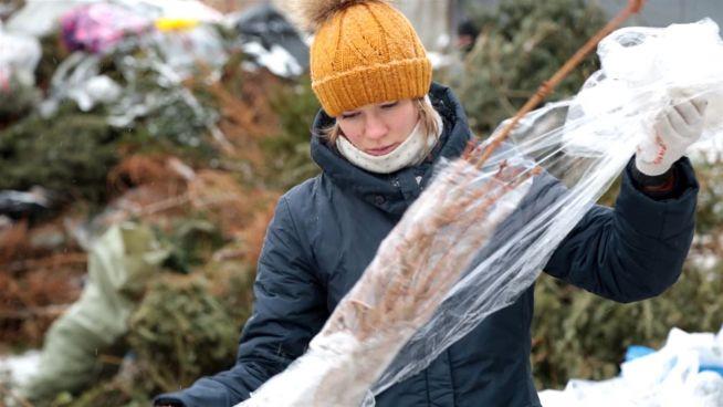 Für den guten Zweck: Russen recyceln Tannenbäume