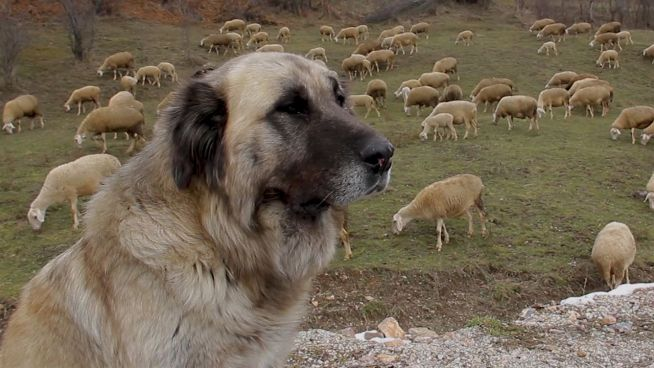 Reiseziel Kosovo: Urlaub im jüngsten Land Europas