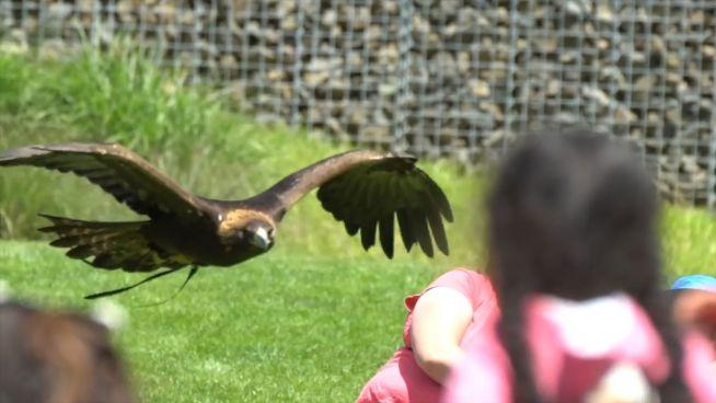 Abgehoben: Vögel bei Start und Landung gefilmt