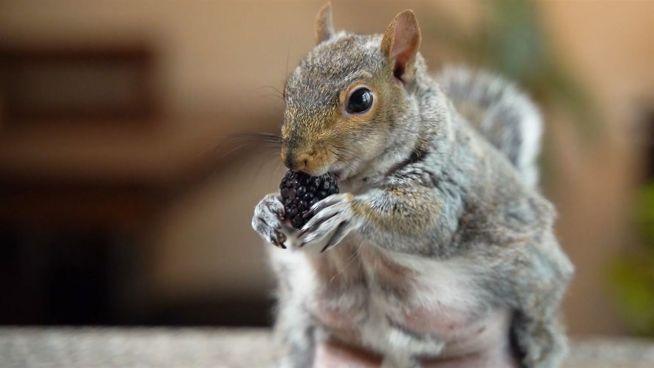 Dieses Eichhörnchen hat 168.000 Follower
