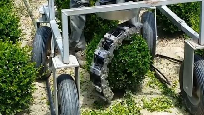 Runde Sache: Diese Maschine bringt Buchsbäume in Form
