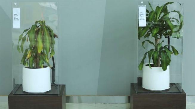 Gemobbtes Grün: Pflanze lässt die Blätter hängen