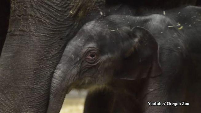 Elefanten in Partylaune: Lilys fünfter Geburtstag!