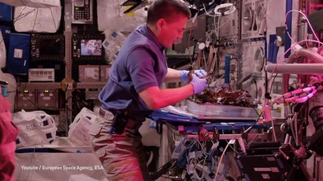 Projekt Melissa: ESA will Leben ins All bringen