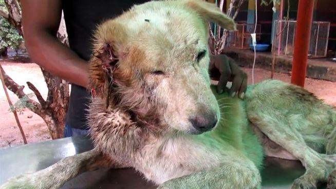 Verwahrlost: Animal Aid schenkt Hund wieder Lebensmut