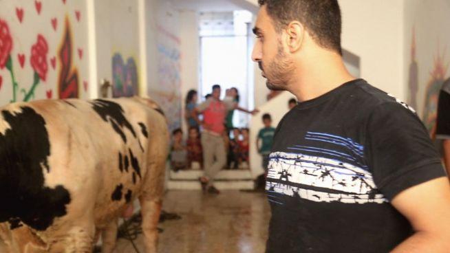Opferfest: Gestresster Schlachter denkt an die Armen