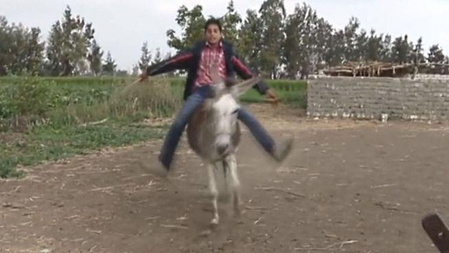 Dieser Esel kann verdammt hoch springen