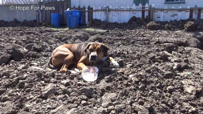 Völlig verängstigt: Herrenloser Hund lebt auf Baustelle