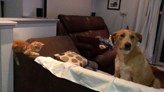 Rocco und Chester: Freundschaft mit Schwanzwedeln