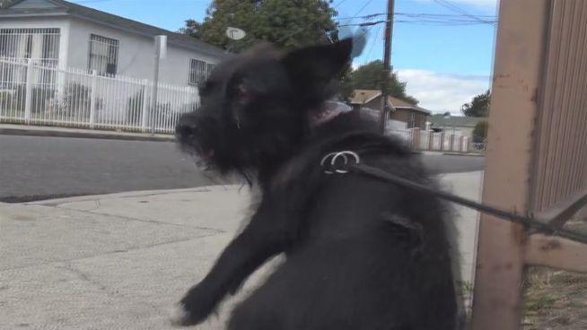 Trotzig: Angefahrener Hund flüchtet vor eigenen Rettern