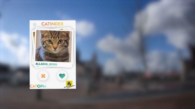 Catinder: Neue Dating-App für einsame Kätzchen